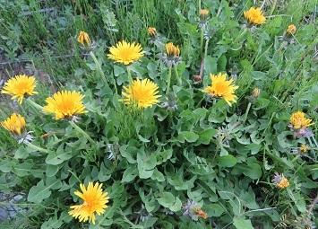 野の花・9