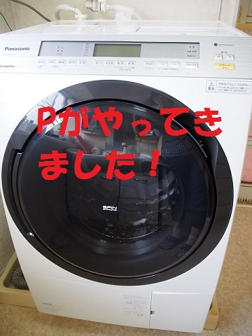P7200252.jpg