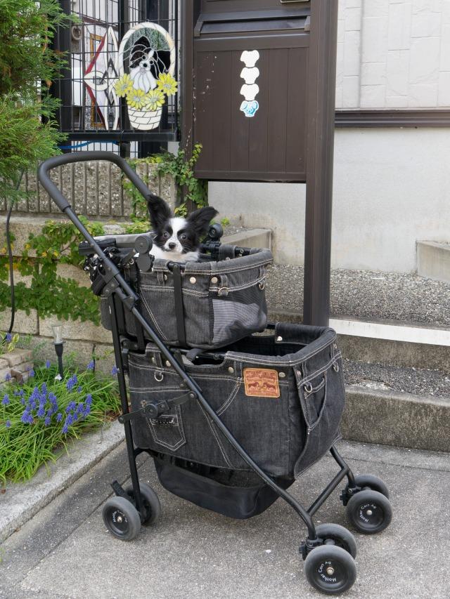 カートで初散歩-01