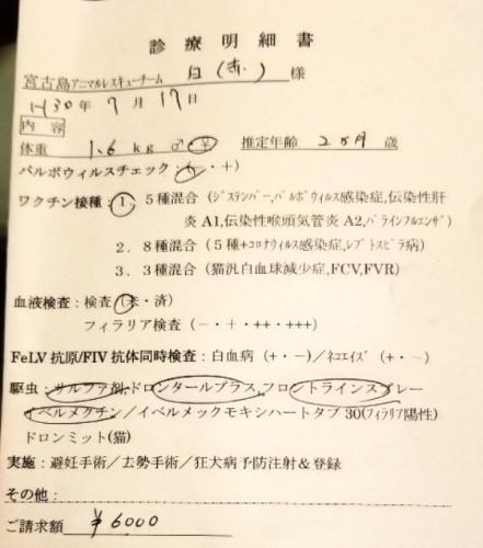 276ローザの医療 (2)