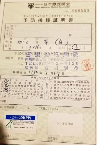 287マリオ医療 (1)
