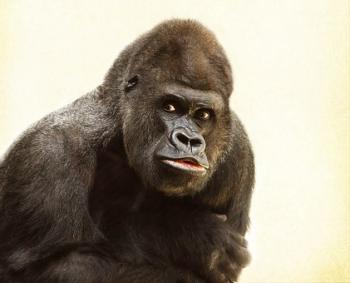 gorilla-448731__340.jpg