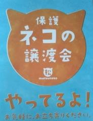 松ねこポスターDSC_0500