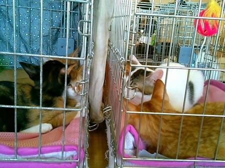 子猫の井戸端会議20180818_144552069