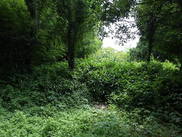 実家の前の森