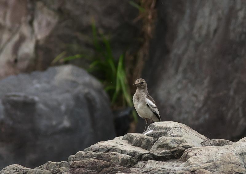 野鳥 (1)
