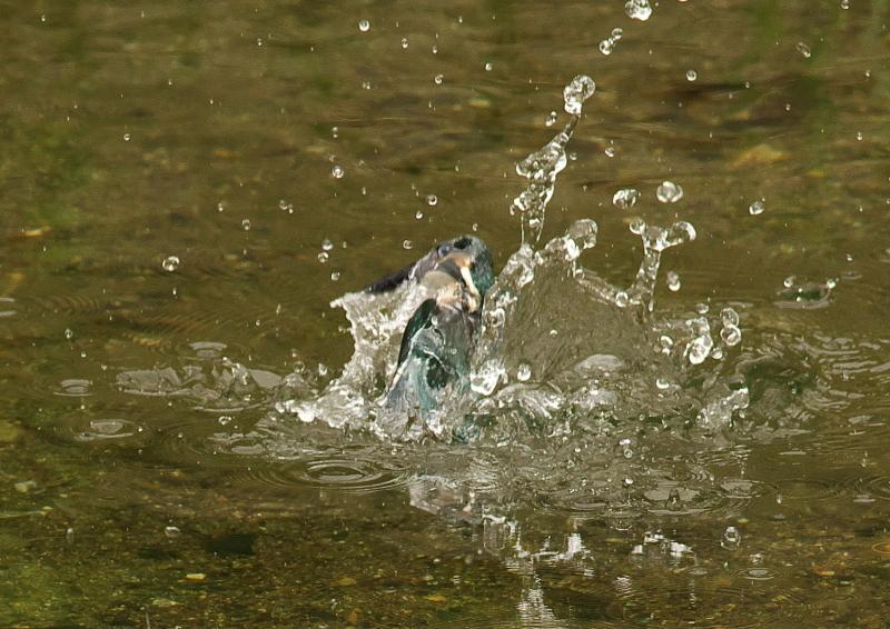 水中 (2)