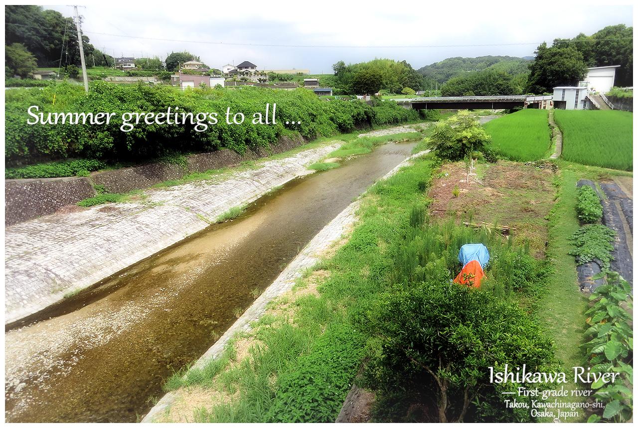 一級河川 石川 河内長野市高向 Kawachinagano-shi