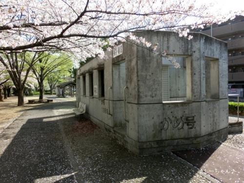 かめの道の桜_03