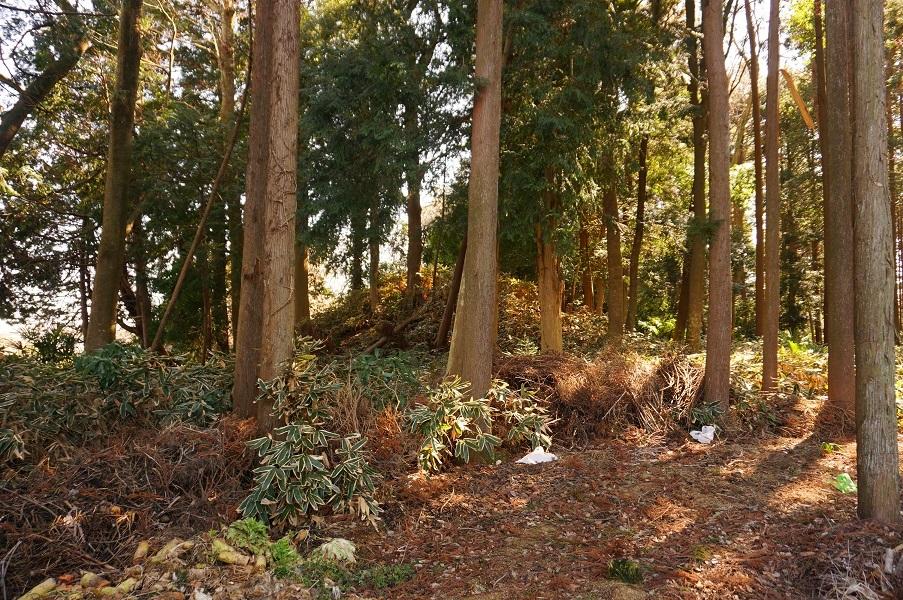 05 5号墳南の林中に見えるマウンド(?)