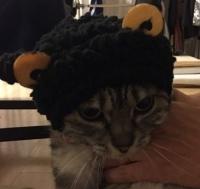 ネコの被り物