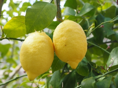 lemon-1117564_960_720.jpg
