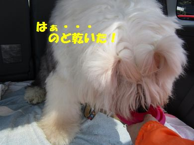 IMG_3729.jpg