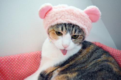 みくピンクくま舌ペロ