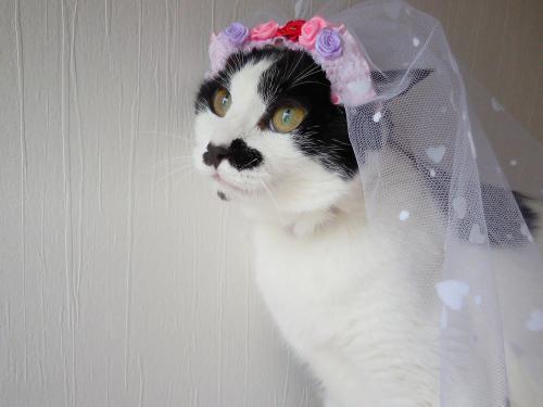 くぅ花嫁さん