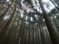 植林された山