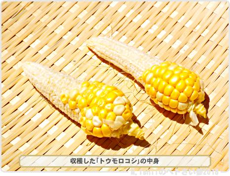 ペトさい(トウモロコシ・改)68