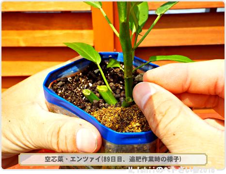 ペトさい(空芯菜・改)34
