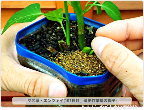 ペトさい(空芯菜・改)42