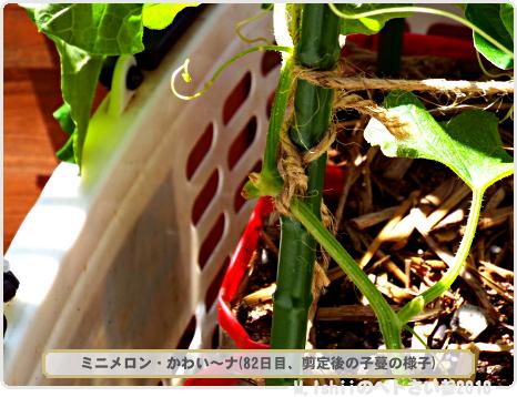 ペトさい(ミニメロン)44