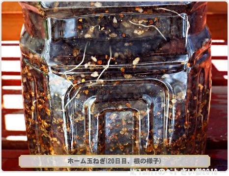 ペトさい(ホーム玉ねぎIV)11