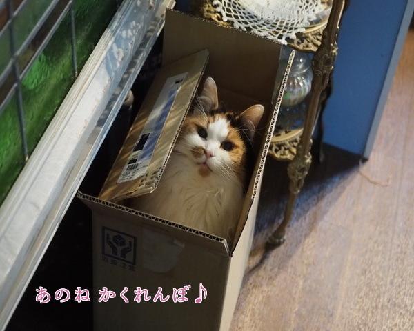 19 かくれんぼ
