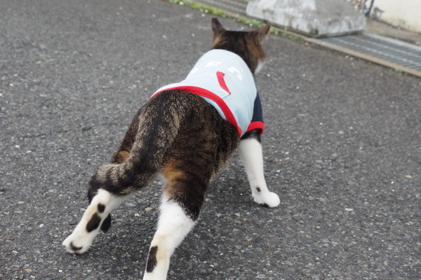下半身麻痺の健太郎 階段を登る!