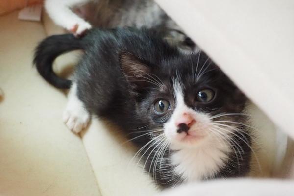 とりあえず仔ネコ! 仔ネコ! 仔ネコ~