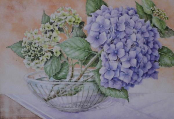 紫陽花 1806