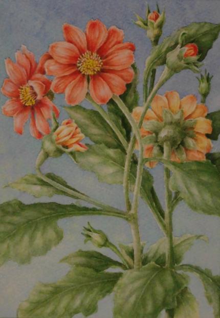 チトニア 1809