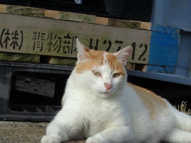 chakichi0047.jpg