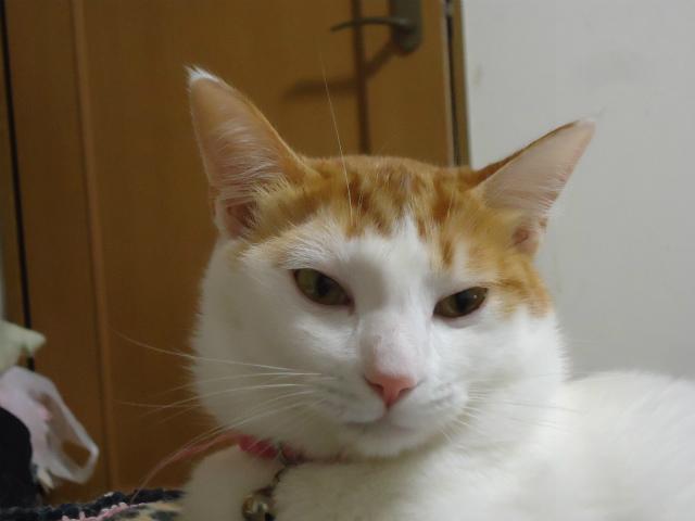 momiji0046.jpg