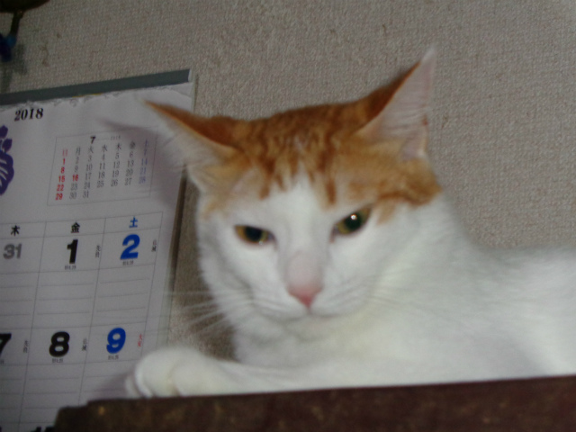 momiji0054.jpg