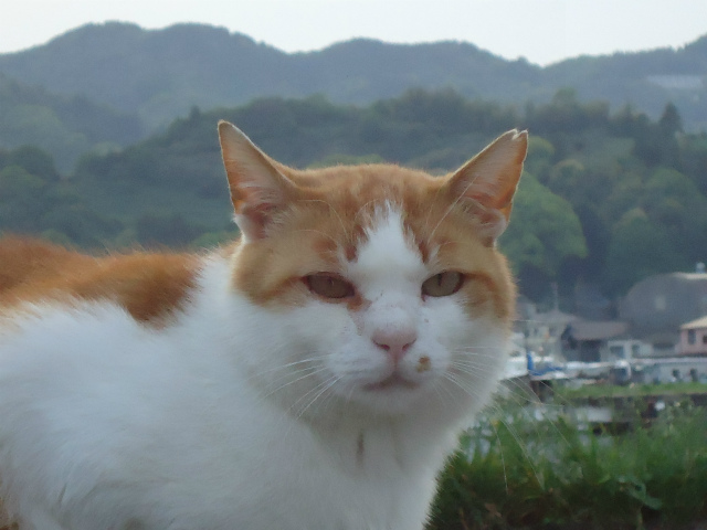 satuki0051.jpg