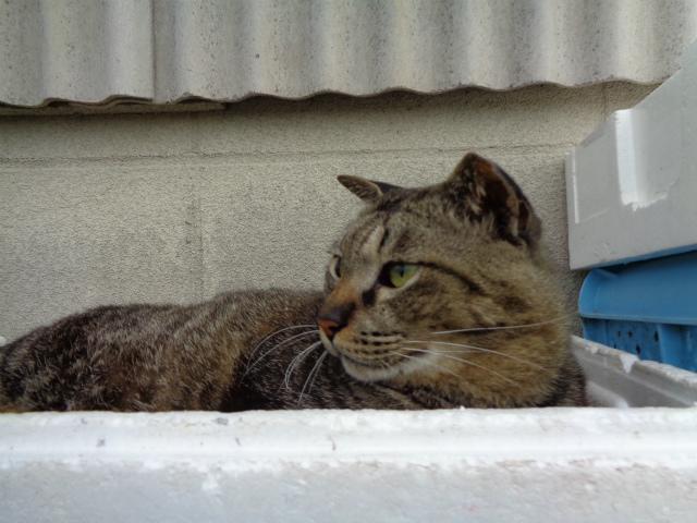 torajirou0055.jpg