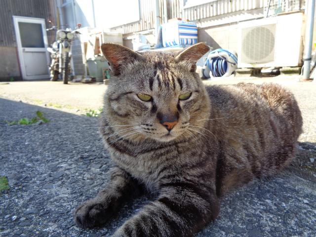 torajirou0056.jpg