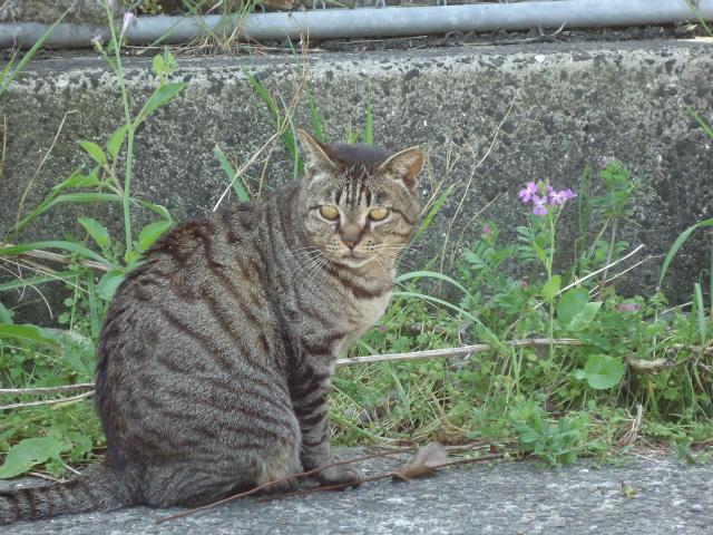 torakichi0046.jpg