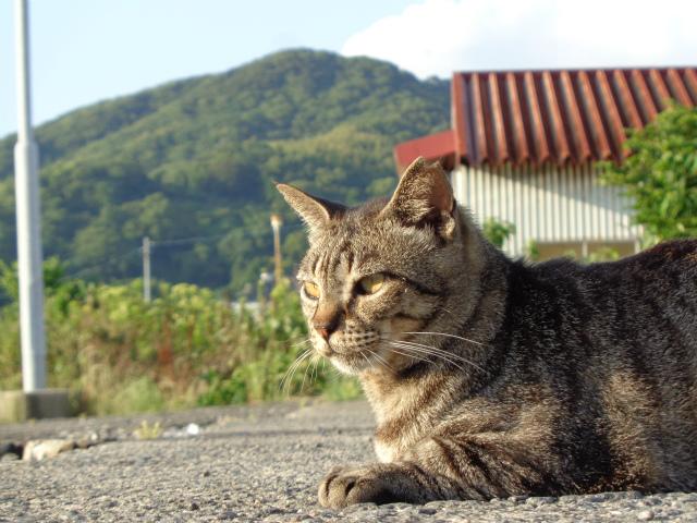 torakichi0056.jpg
