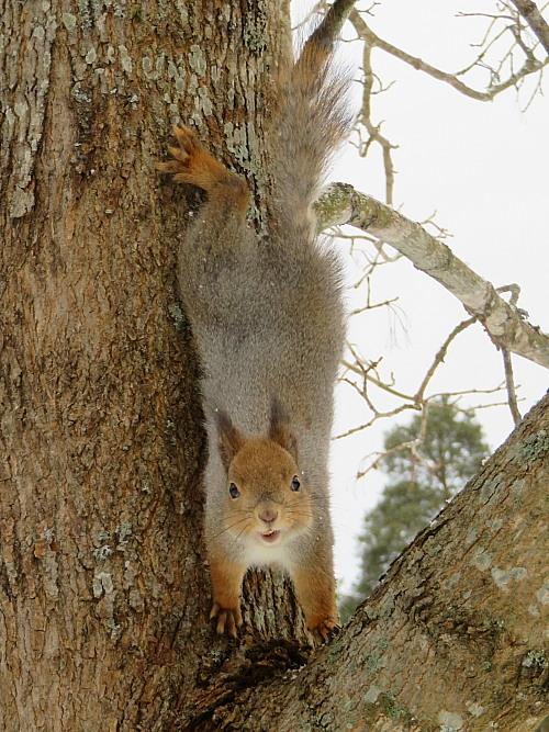 フィンランド 庭 可愛い訪問者 リス りす Orava Squirrel