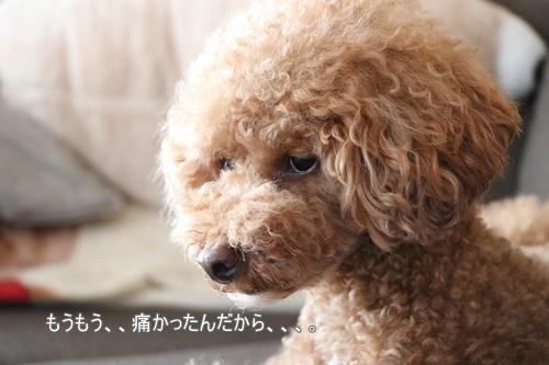 IMG_4635.jpg