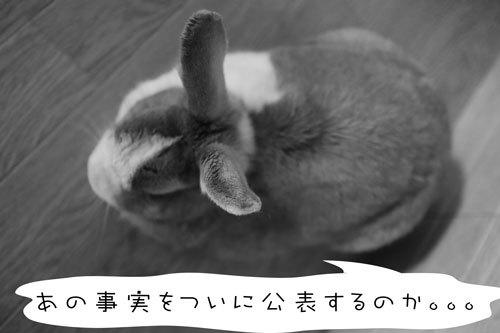 IMG_29934.jpg