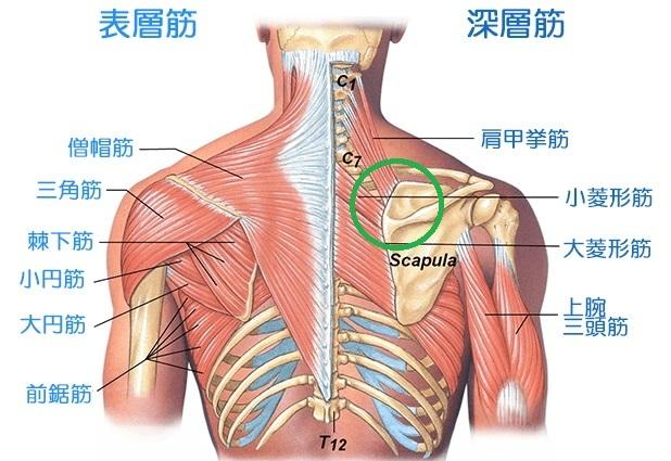 image1肩甲骨