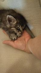 手の上で眠る
