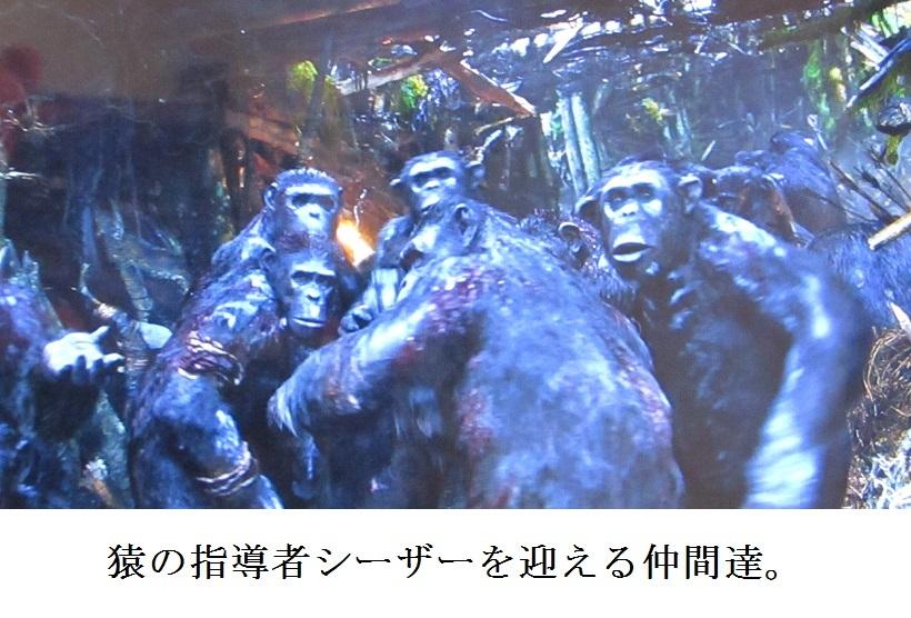 ape b