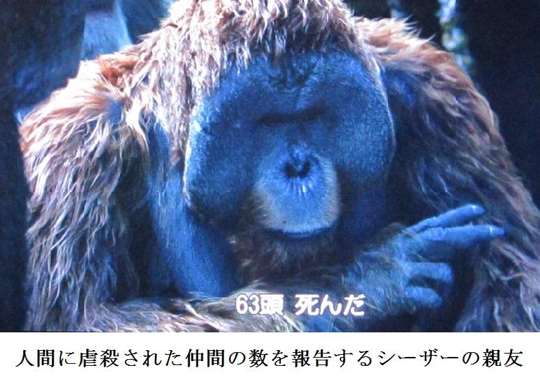 ape f
