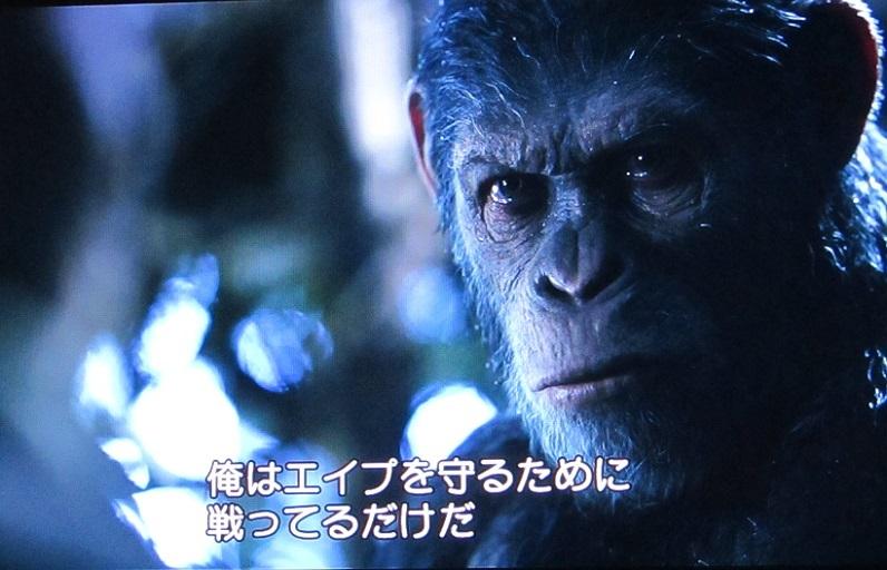 ape h