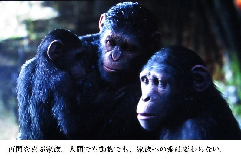 ape j