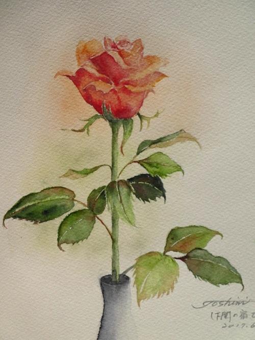 下関の宿のバラ