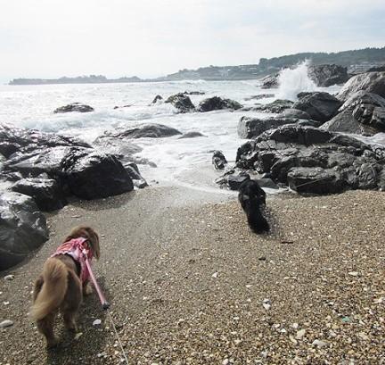 種差海岸180814⑬