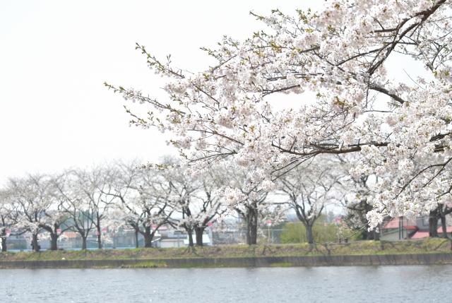 鷹巣中央公園2018042900001
